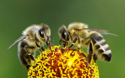 What Are The Three Key Reasons You Need To Consider Working More Like Honey Bees?
